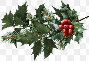 Blueberries - Mistletoe Christmas Clip Art PNG