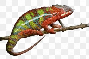Animal,chameleon - Panther Chameleon Reptile Ambilobe Lizard Stock Photography PNG