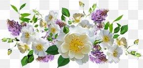 Rosa Canina Prickly Rose - Rose PNG