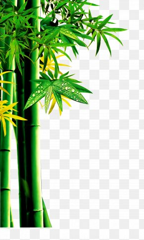 Bamboo - Download Bamboo RGB Color Model PNG