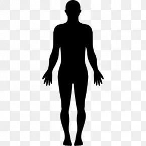Human - Human Body Homo Sapiens Silhouette Clip Art PNG
