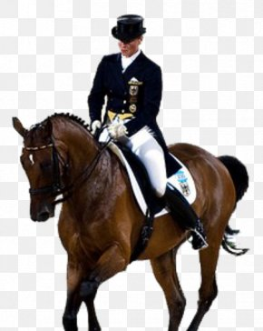 Horse - Horse Olympic Games 2008 Summer Olympics 2012 Summer Olympics Dressage PNG