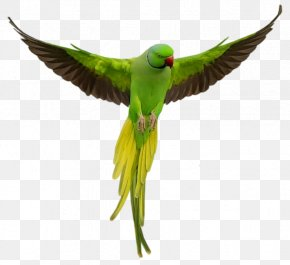 Parrot Download - Parrot Bird Macaw PNG