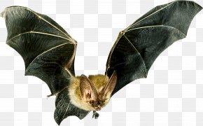 Bat - Microbat Flight Bat Detector Animal PNG