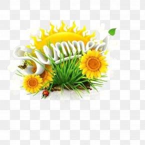Summer Sunflower Download - Common Sunflower Summer Solstice PNG