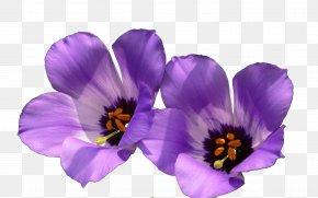 Purple Wildflowers - Violet Wildflower Wallpaper PNG