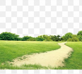 Flowers,lawn,the Way - Lawn Download PNG