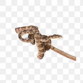 Snake - Snake Reptile Clip Art PNG