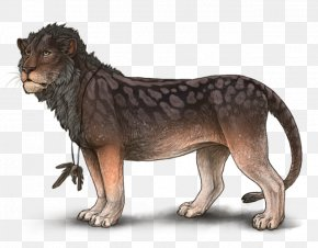 Lion - Lion Leopard Cheetah Drawing Felidae PNG