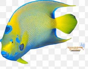 Peixe - Marine Biology Marine Mammal Product Design Fish PNG