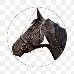 Round Horse Head - Horse Harness Stallion Halter PNG