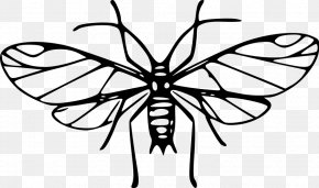 Mosquito Cliparts - Insect Louse Mosquito Ant Clip Art PNG