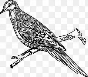 Dove Images Pictures - Columbidae Die Txfcmmler- Und Purzlertauben: Ein Beitrag Zum Mustertauben-Buch Domestic Pigeon Illustration PNG