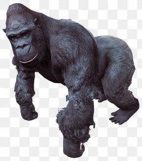 Gorilla - Fallout 4: Nuka-World Western Gorilla Eastern Gorilla Kwita Izina PNG