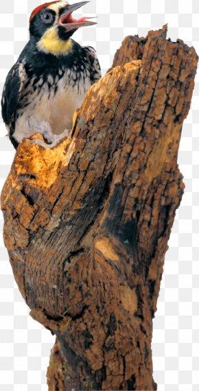 Bird - Woodpecker Bird Pelican Clip Art PNG
