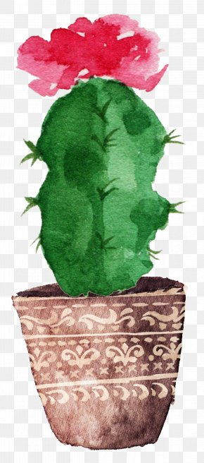 Prickly Pear Cactus Bloom - Cactaceae Watercolor Painting Drawing Canvas PNG