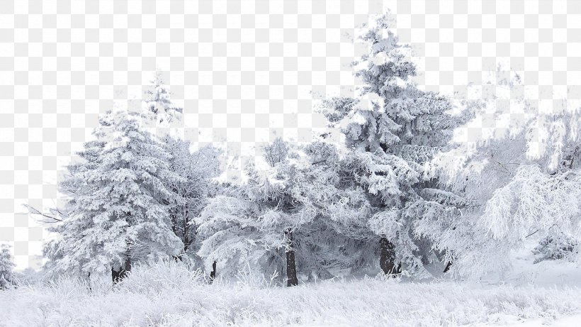 Snow Tree Winter Birch Wallpaper Png 1920x1080px Snow