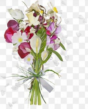 Anthurium Cooktown Orchid - Flower Cut Flowers Plant Bouquet Floristry PNG