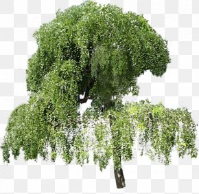 Tree - Tree Plant PNG