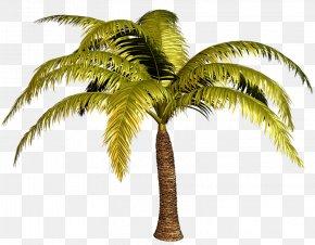 PALMERAS - Babassu Arecaceae Tree Date Palm PNG