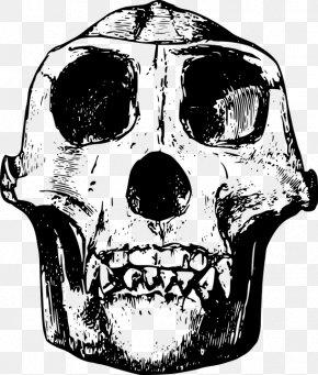 Simple Black Gorilla Animal Bones Bones - Gorilla Skull Clip Art PNG