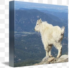 Goat - Mountain Goat Wildlife Sky Plc PNG