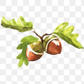 Acorn Fruit Hand Painting Material Picture - Fruit Watercolor Painting Acorn Illustration PNG
