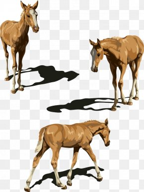 Walking Horse - Tennessee Walking Horse Foal Illustration PNG