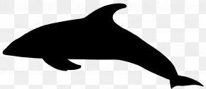 Tucuxi Sea Lion Killer Whale Dolphin Clip Art PNG