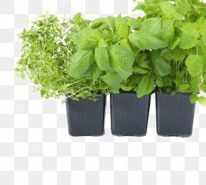Herbs - Grow Light Light-emitting Diode Garden Hydroponics PNG