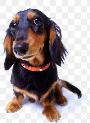 Pet Dog,pet - Dog Training Shock Collar Dog Collar PNG