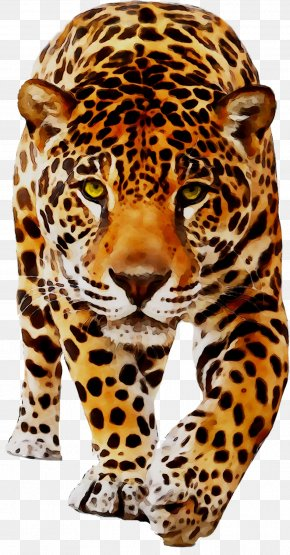 Jaguar Leopard Cat Tiger Animal PNG