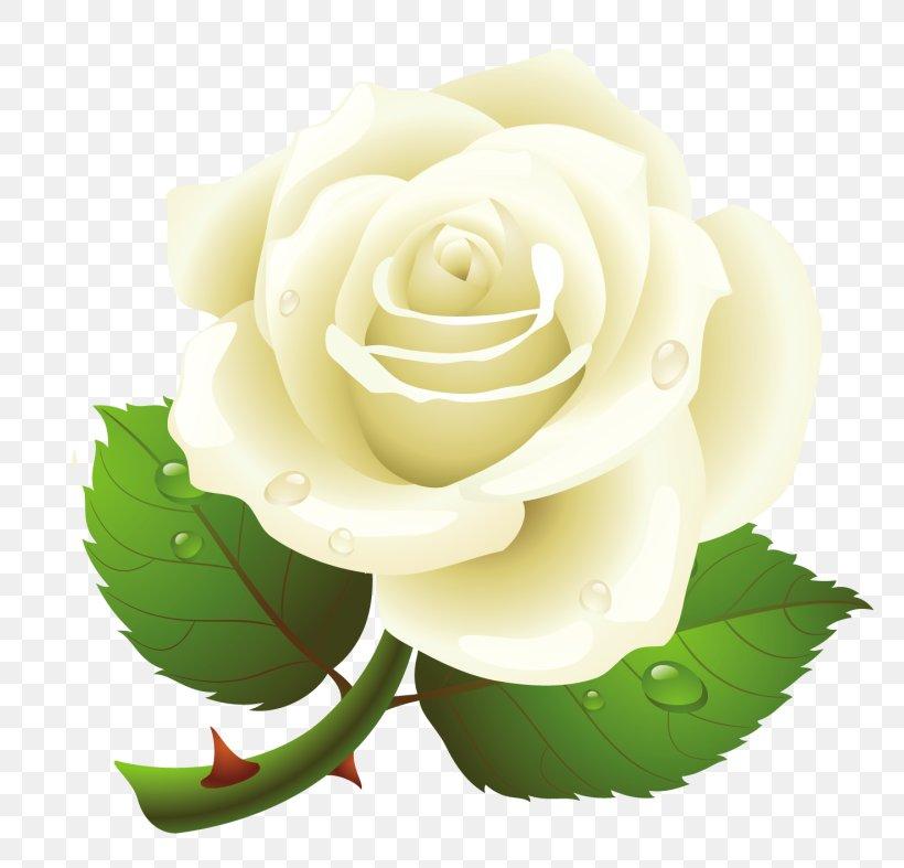 Clip Art Borders And Frames Illustration Rose, PNG, 800x787px, Borders And Frames, Botany, Cut Flowers, Floribunda, Flower Download Free