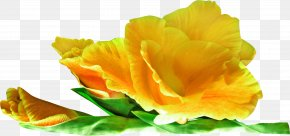 Yellow Rose - Flower Yellow Clip Art PNG