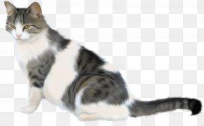 Cats - Tabby Cat Kitten PNG