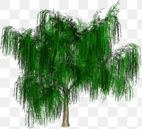 Tree - Tree Forest Woody Plant PNG