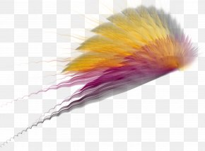 Wings - Photography PNG