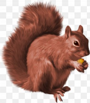 Squirrel - Squirrel Clip Art PNG