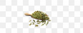 Longjing Tea Leaves - Organism Jewellery PNG