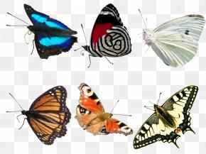Butterfly - Monarch Butterfly Butterfly Net PNG