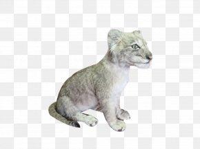 Lion - Lion Cougar Big Cat Fur PNG