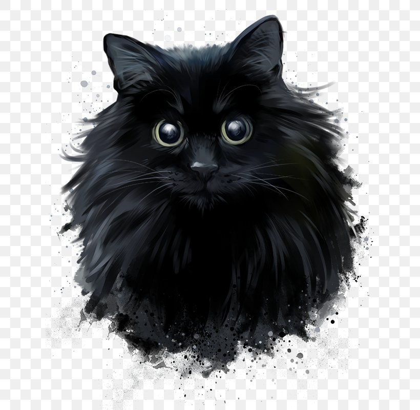 Persian Cat Black Cat Norwegian Forest Cat Drawing Png 643x800px Persian Cat Asian Semi Longhair Black