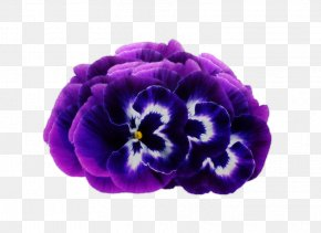 Dream Purple Flowers - Violet Purple Flower Pansy PNG