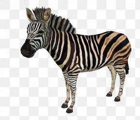 Zebra - Zoo Tycoon 2: Extinct Animals Quagga Horses Chapman's Zebra PNG