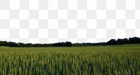 Green Wheat Field - Sweden Landscape Pixabay Nature PNG