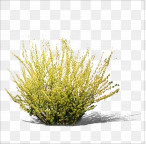 Grass - Yellow RGB Color Model PNG