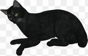 Animated Cat Download - Black Cat Korat Bombay Cat Manx Cat Domestic Short-haired Cat PNG