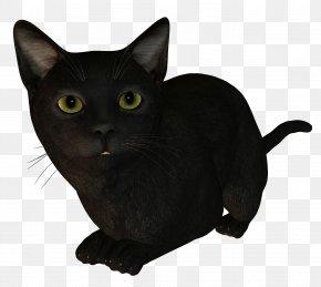 Cat - Bombay Cat Burmese Cat Korat Kitten Black Cat PNG