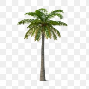Palm Trees - Adonidia Veitchia Coconut Tree PNG
