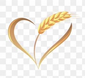 Wheat Harvest - Wheat Ear Illustration PNG